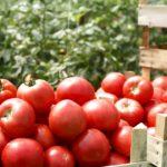 トマト詰め放題 1袋 500円